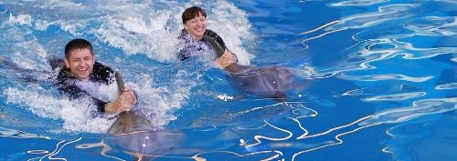 Что подарить на День всех влюбленных? Плавание с дельфинами