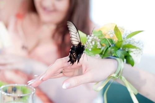 Живые тропические бабочки в подарок на День всех влюбленных