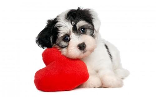 10 удачных идей хороших подарков на День святого Валентина животное