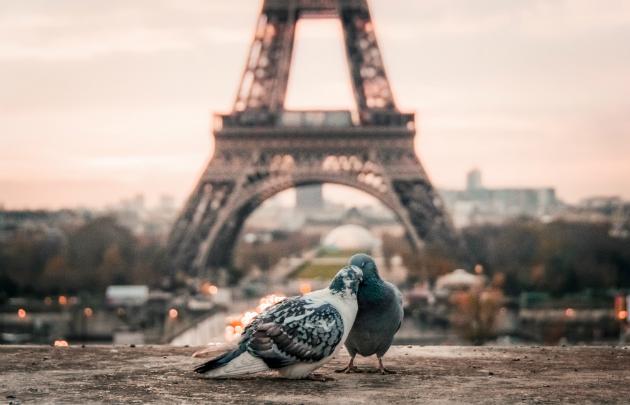 День святого Валентина в Париже: путеводитель для влюблённых