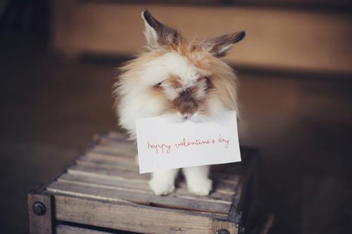 Удачные подарочные идеи на День святого Валентина: 10 примеров